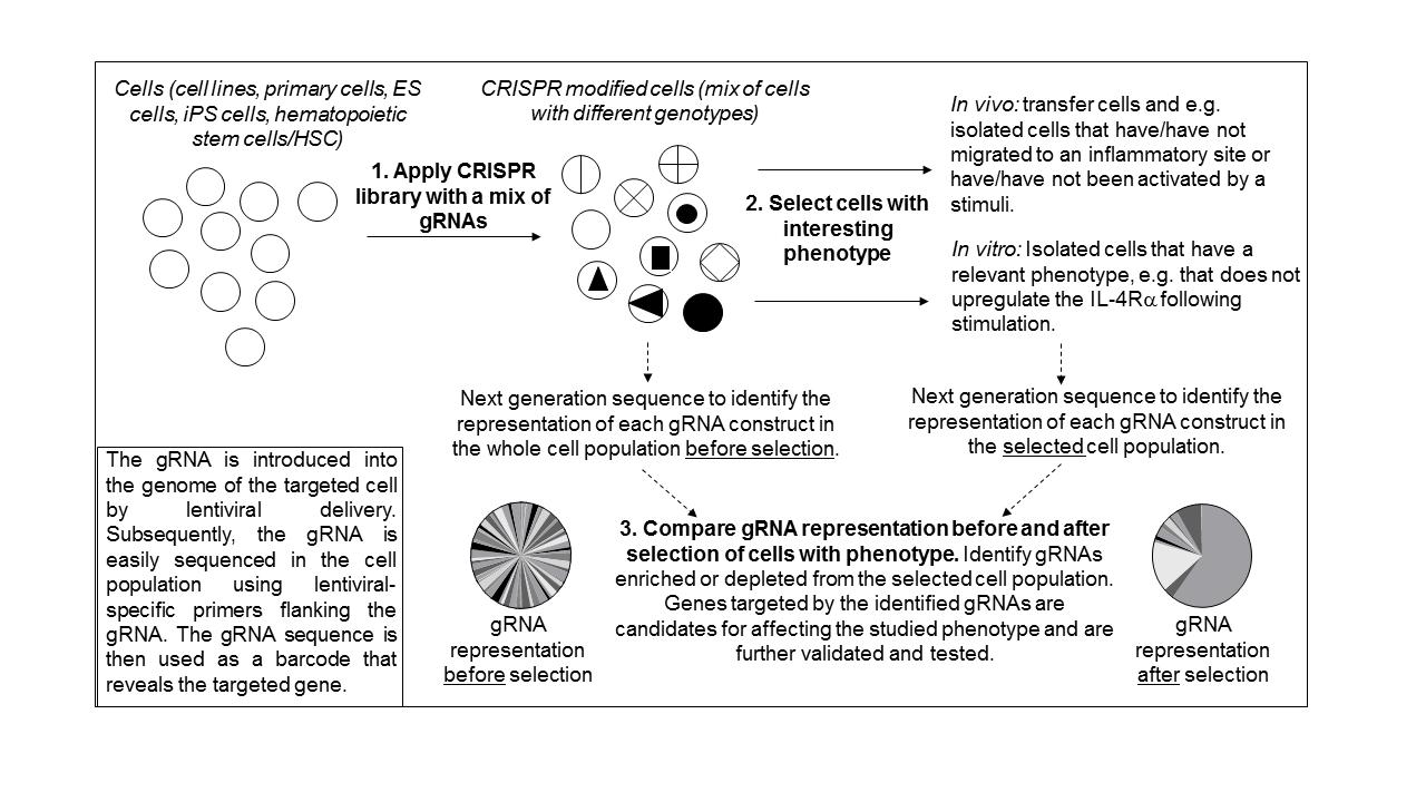 crispr screen for homepage