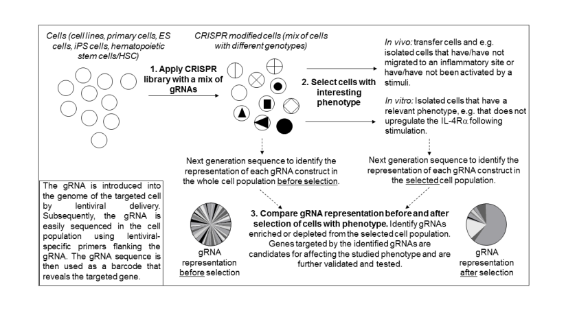 crispr screen for homepage